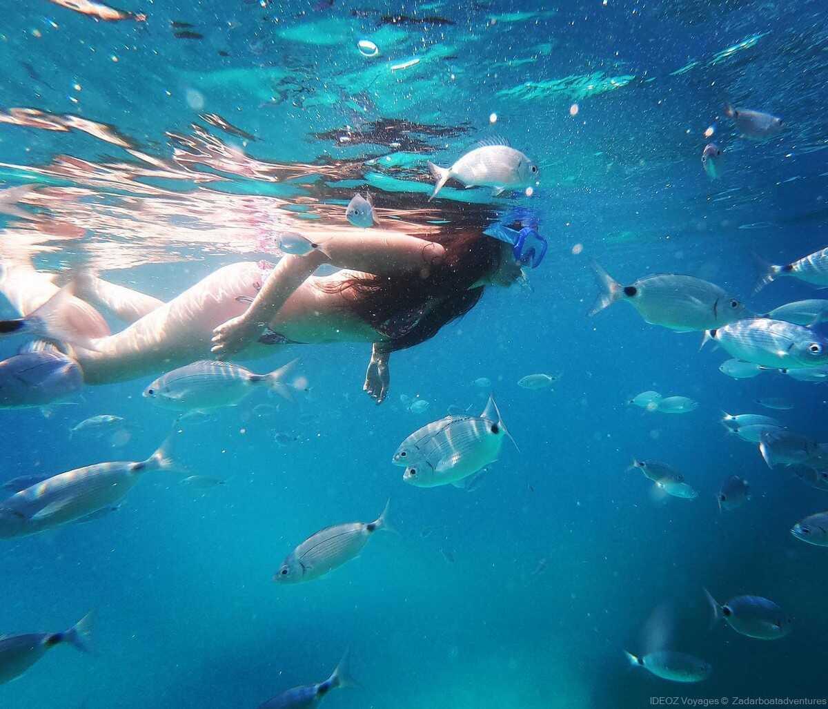 snorkeling dans les kornati poissons