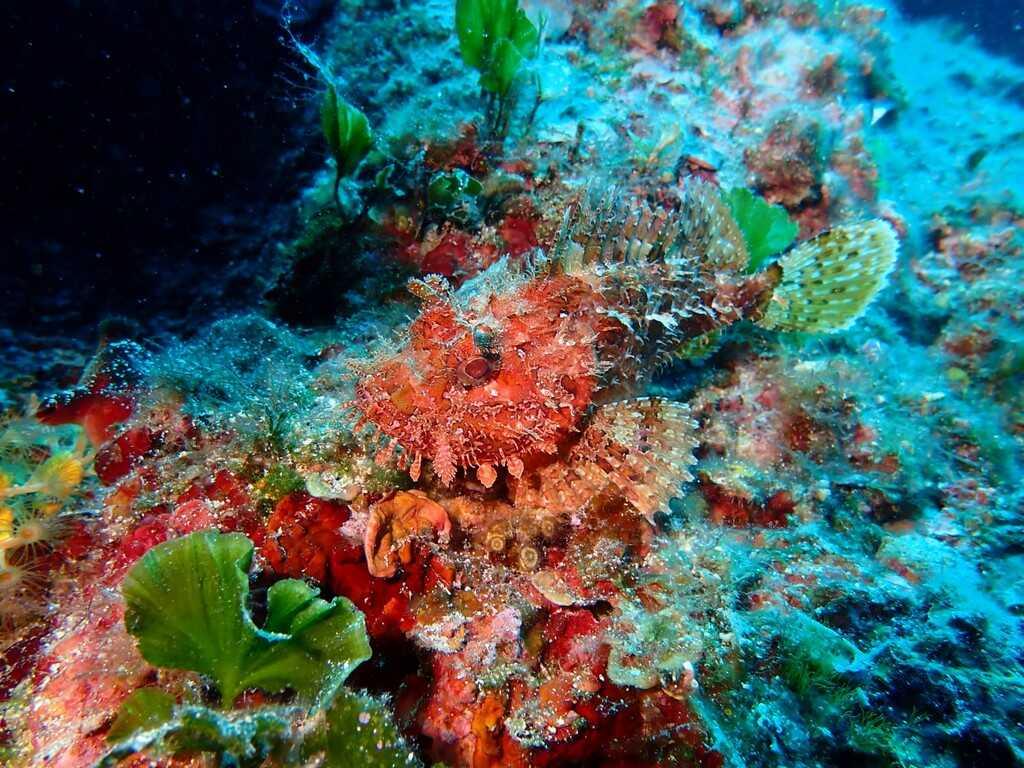 coraux dans larchipel des kornati