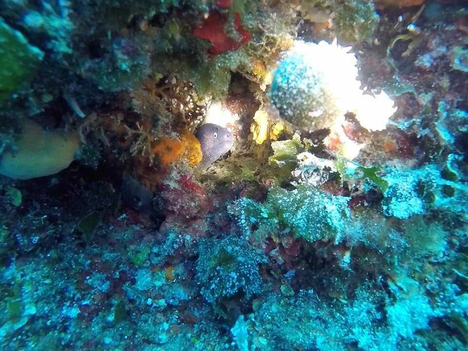 fonds marins des kornati