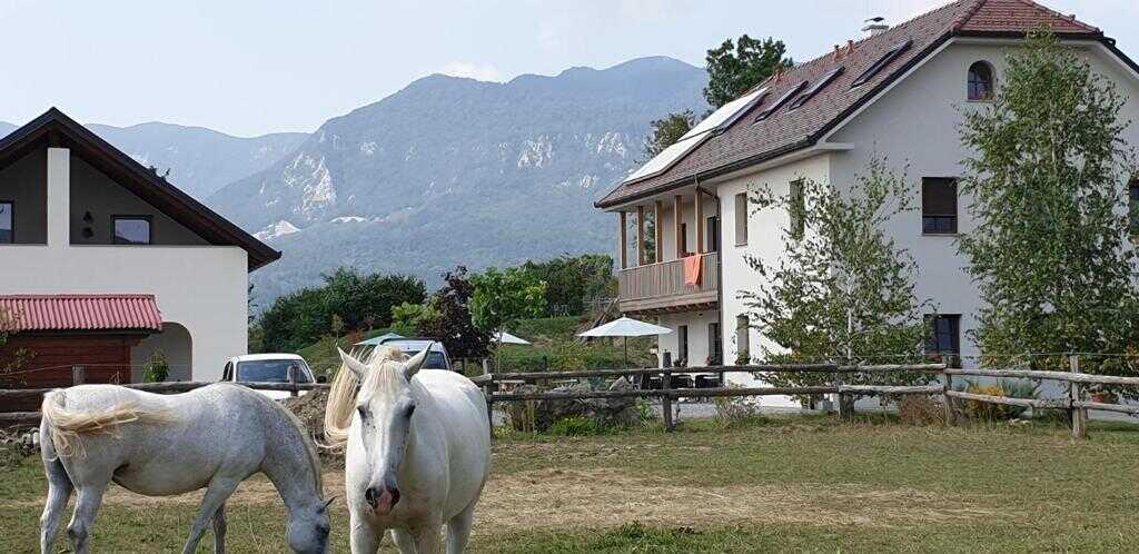 lippizan lodge guest house