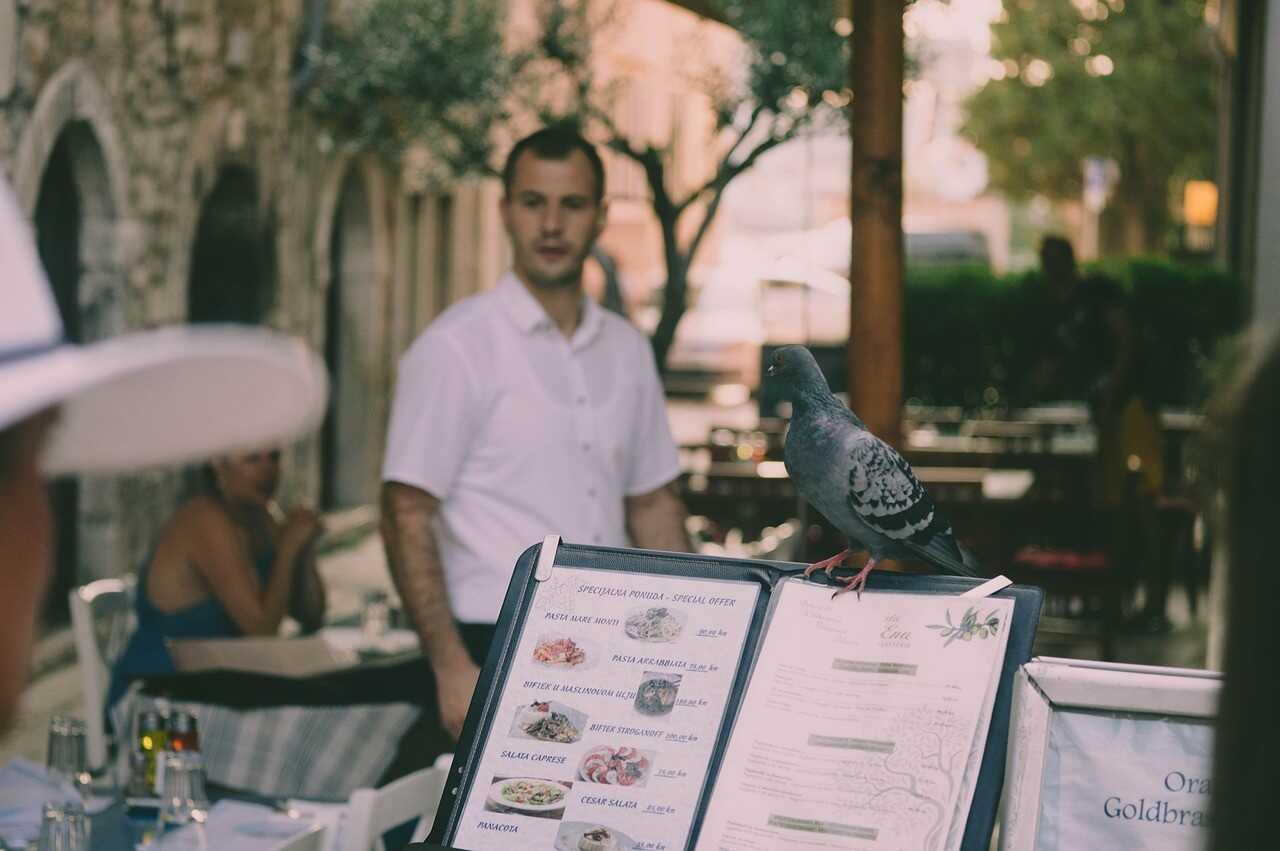 pigeon sur une carte de restaurant