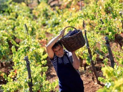 varenik vins croates